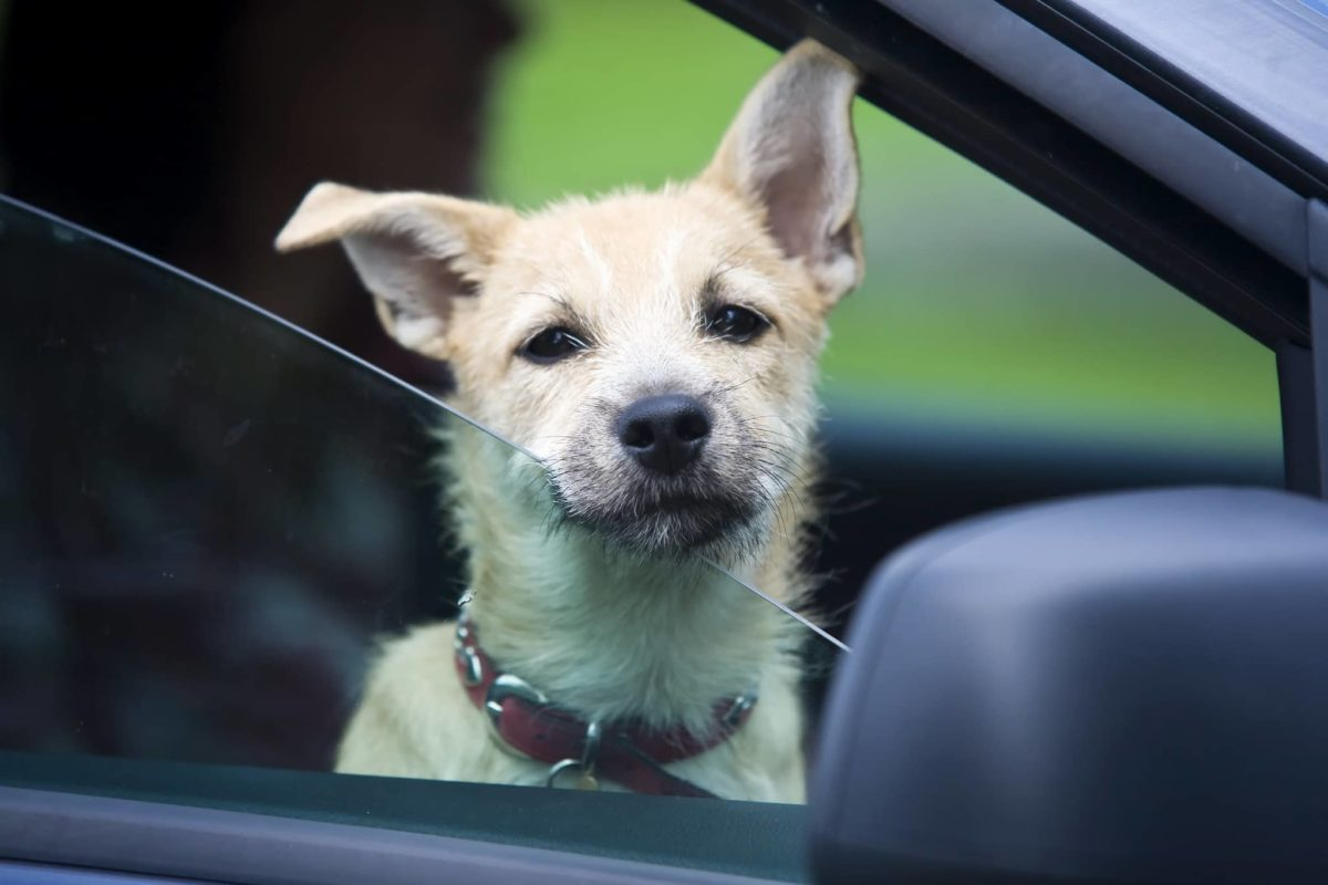 Dog in Car | Bellefontaine, OH